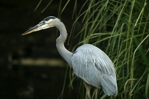 Birding Birdwatching Florida Port Richey